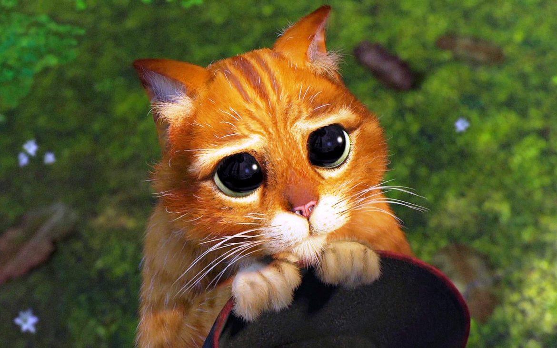 Gato-lastimero